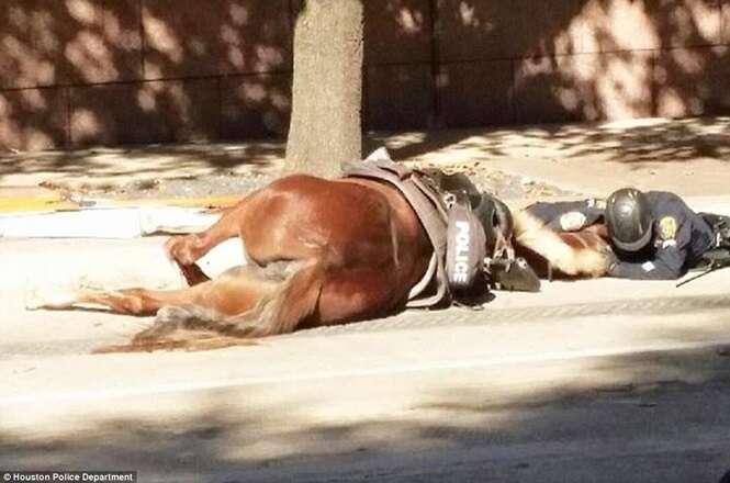 Policial se recusa abandonar com quem trabalhava após animal ser atingido por caminhão e morrer na calçada