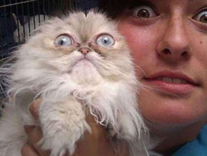 Animais de estimação com medo de ir ao veterinário