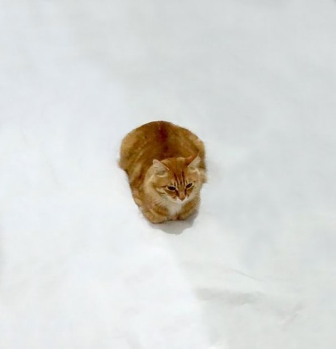 Foto comum de gato viraliza nas mãos de internautas