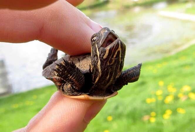 Imagens curiosas de tartarugas