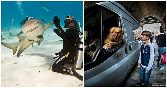 Fotos curiosas envolvendo animais