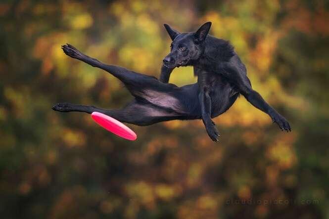 Cãezinhos que parecem voar quando brincam com frisbee