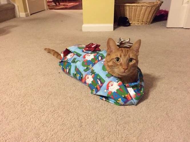 Imagens aleatórias envolvendo o Natal