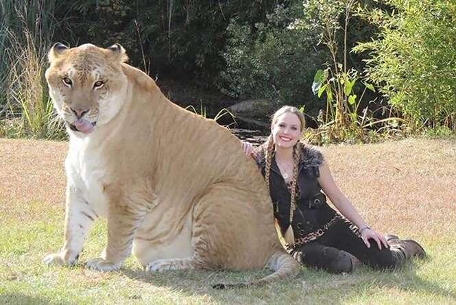 Animais híbridos que você não vai acreditar que são reais