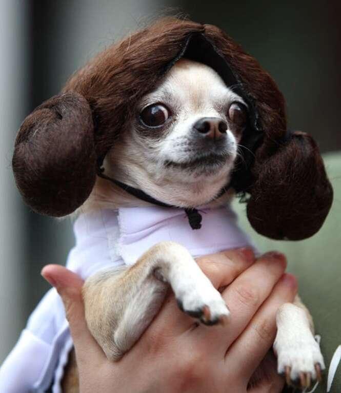 Cãezinhos no estilo de Star Wars