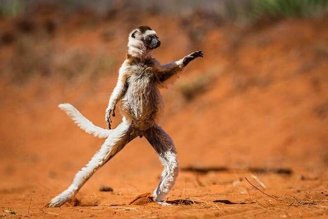Fotos curiosas de animais registradas no momento perfeito