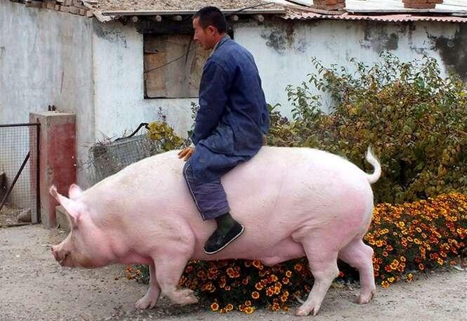Fotos de animais de estimação incomuns