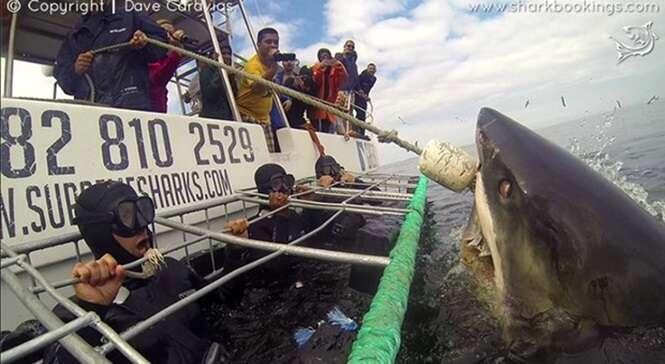 Turistas ficam em pânico ao receberem visita de enorme tubarão branco durante mergulho