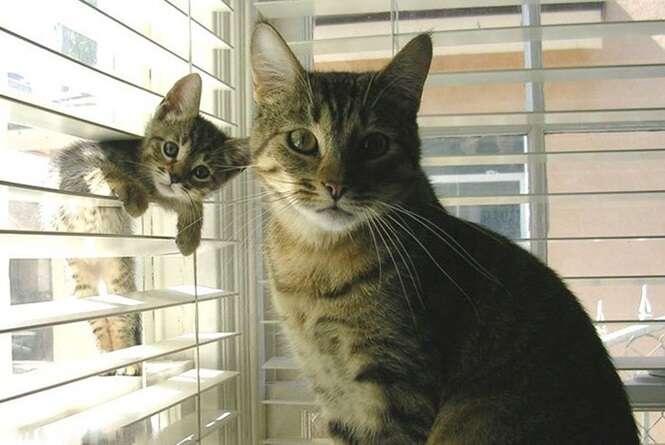 Imagens fofas de gatos com seus filhotes