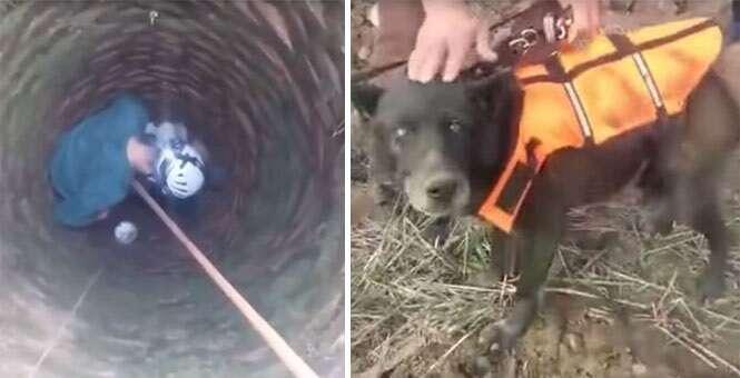 Vídeo mostra momento em que cão cego é resgatado de dentro de poço