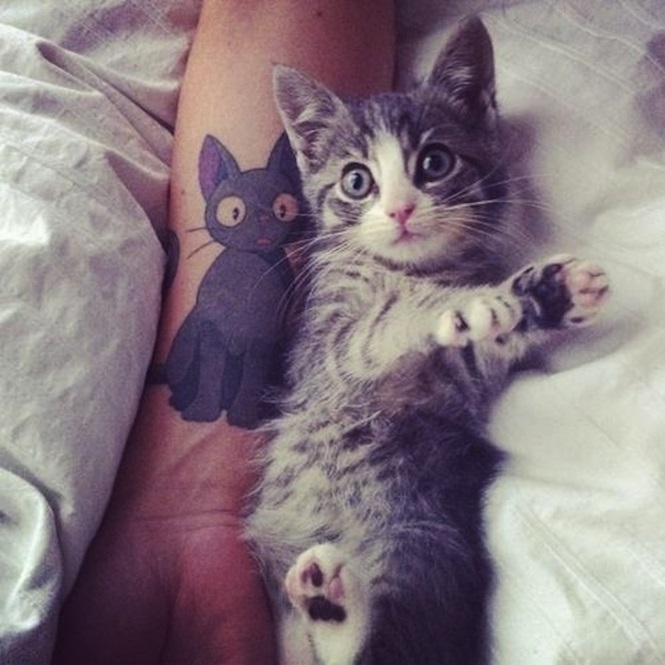 Tatuagens para inspirar quem ama gatos