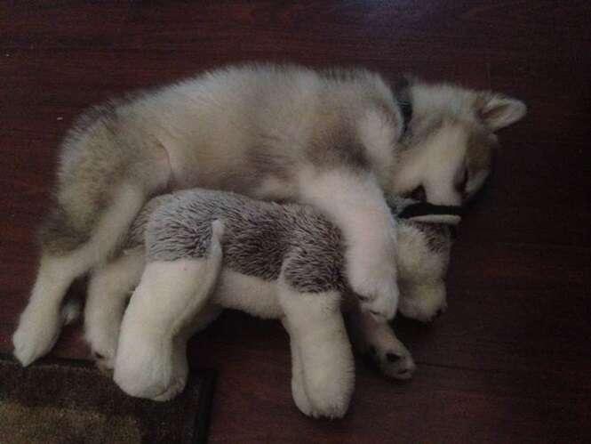 Cão destrói todos os brinquedos de pelúcia que recebe – exceto um