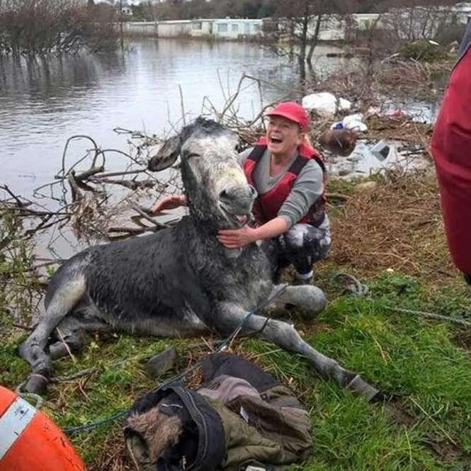 Burro dá sorriso se mostrando extremamente feliz e aliviado após ser resgatado em inundação