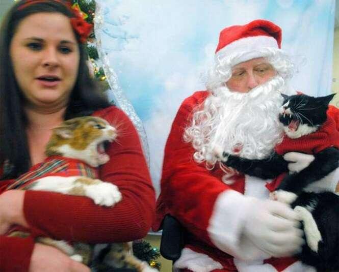 Foto se torna viral ao mostrar Papai Noel evitando briga entre gatos