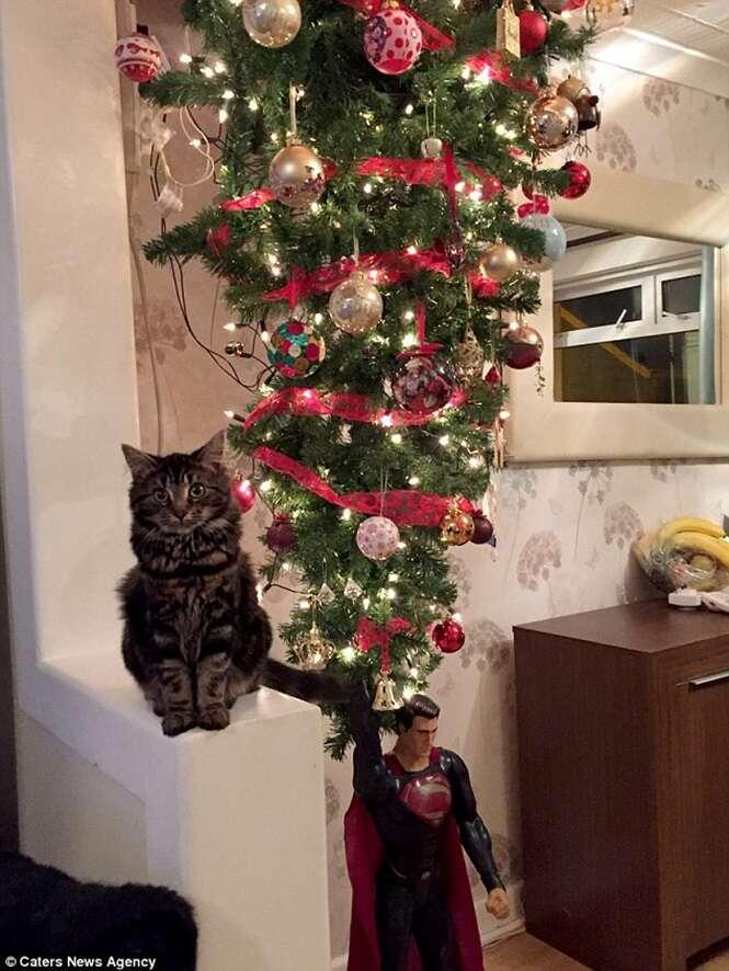 Família monta árvore de Natal de cabeça para baixo para evitar que gato de estimação a destrua