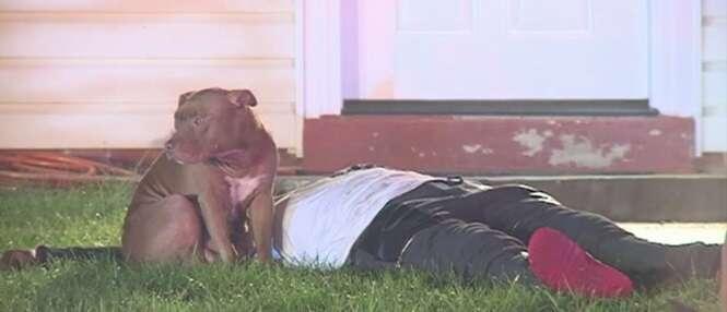 Cadela pitbull se recusa sair de perto de sua dona após mulher ficar ferida durante incêndio