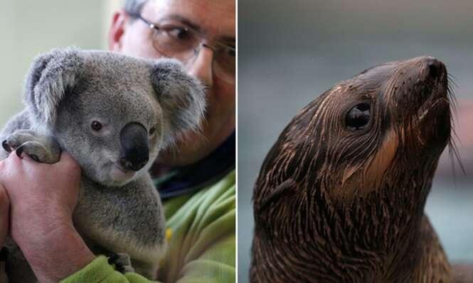 Animais que correm risco de extinção devido à ação do homem sobre a natureza