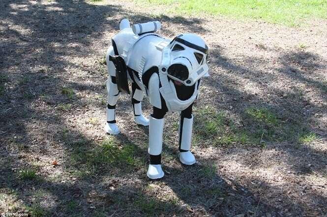 Cadela faz sucesso na web após dona criar roupa de Star Wars para ela usar