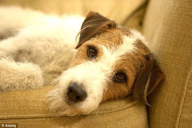 Estudo revela que cães podem demonstrar empatia e imitar sentimentos dos donos