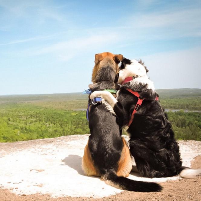 Abraços aconchegantes de animais