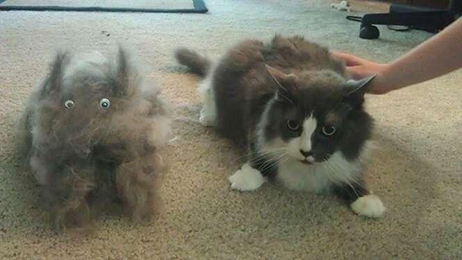 Fotos que resumem o que é ter um animal de estimação
