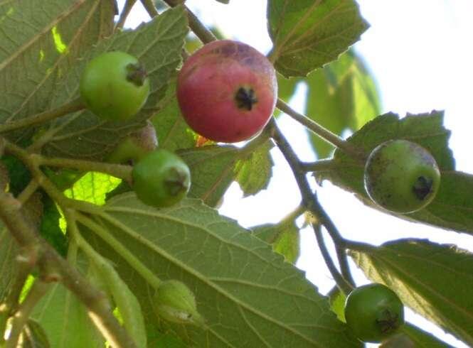 Frutas deliciosas que você provavelmente não conhece