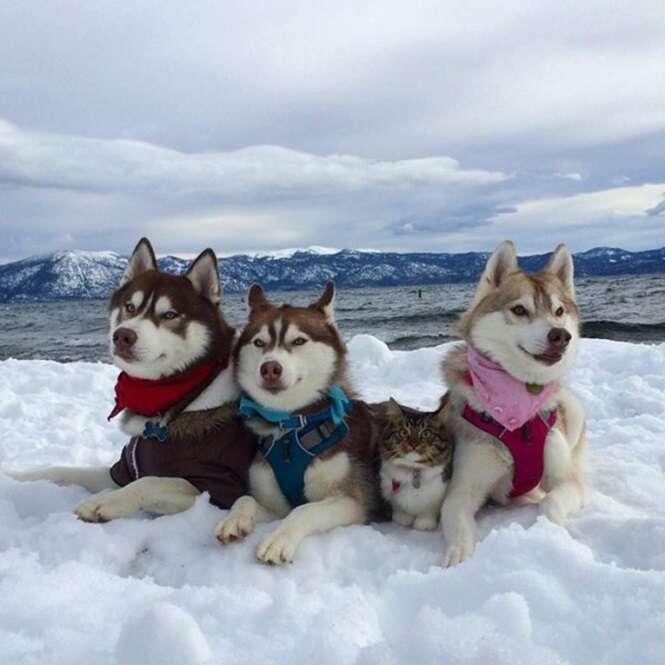Amizade entre huskies e pequeno gatinho comove internautas