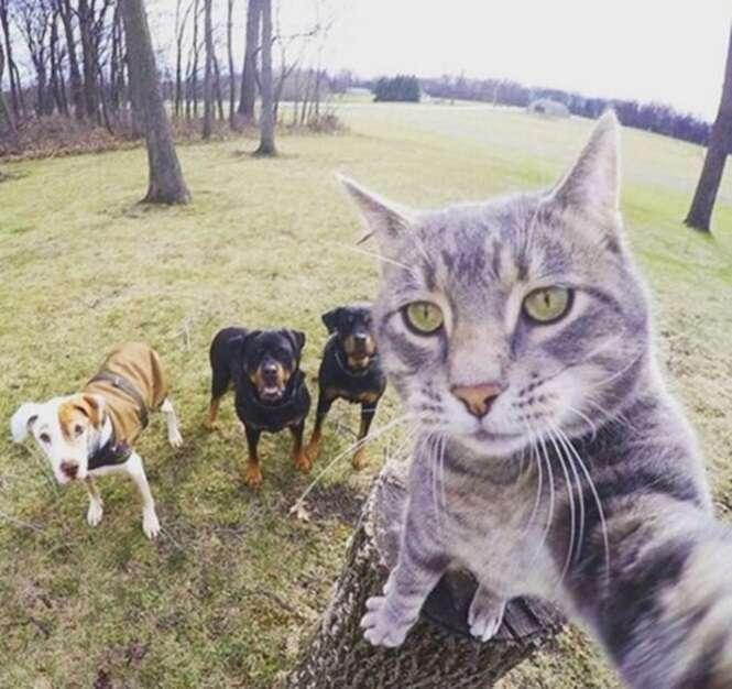 Gato faz selfie com cães e vira sensação na internet