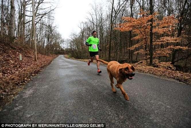 Cadela foge de casa para urinar, entra em maratona e chega em sétimo lugar