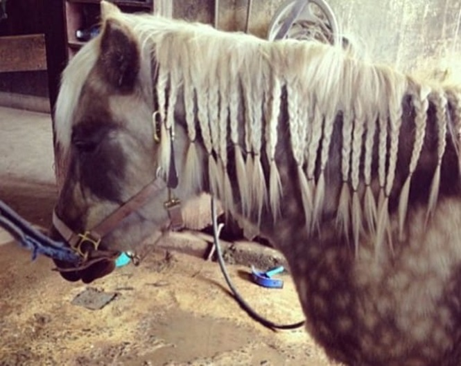 Imagens que provam que os cavalos podem andar na moda