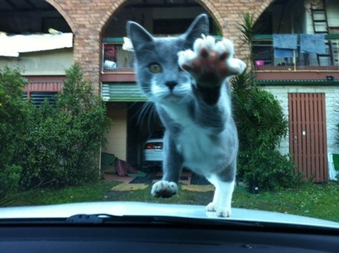Imagens de gatos registradas no momento certo