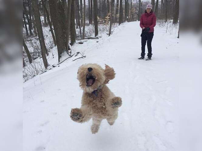 Fotos divertidas de cãezinhos