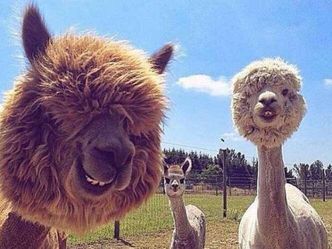 Imagens curiosas envolvendo animais