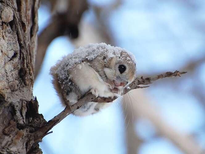 Belas imagens demonstrando a beleza e pureza dos esquilos