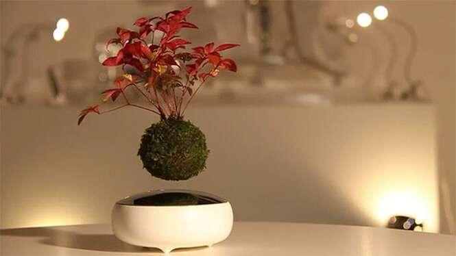 Árvores de bonsai flutuantes se tornam realidade no Japão