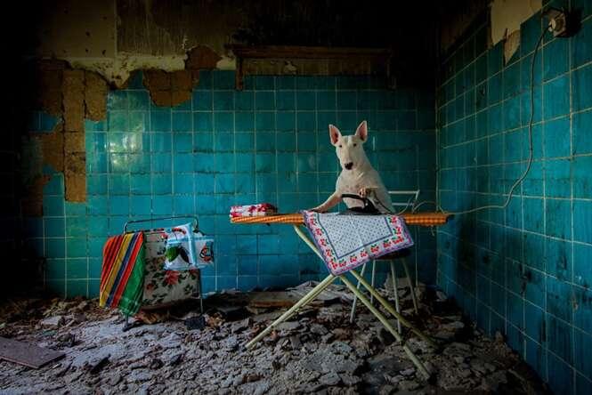 Cãozinho viajante mostra locais abandonados em fotos criativas
