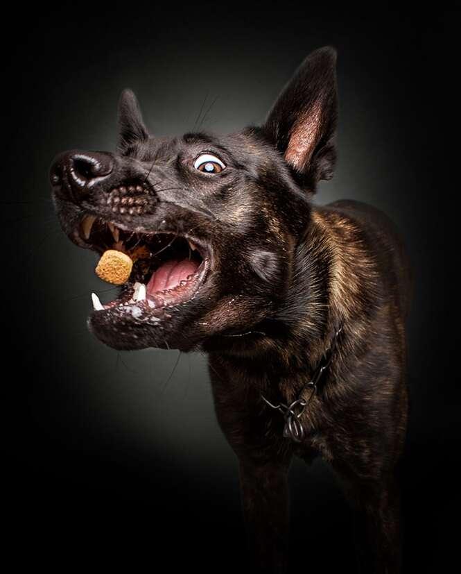 Fotos com expressões divertidas de cães tentando pegar comida