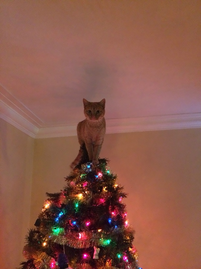 Gatos que destruíram as árvores do último Natal