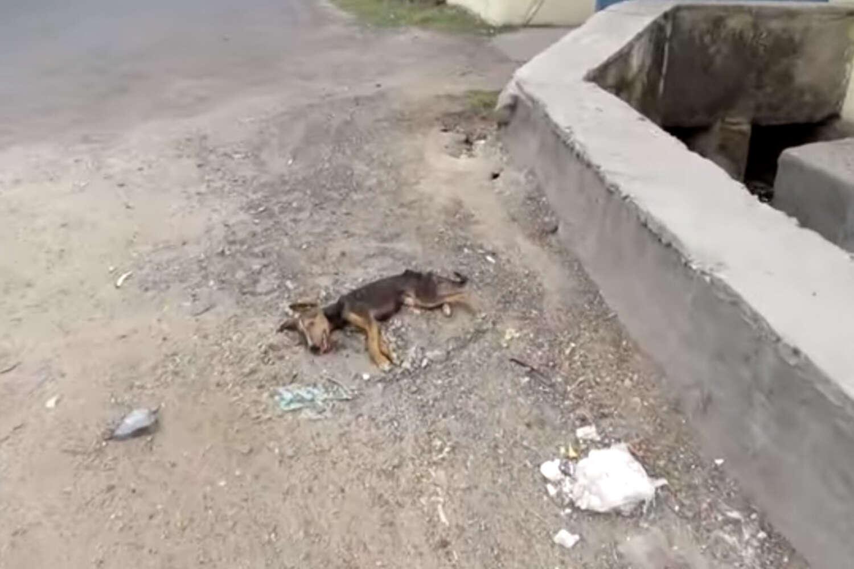Vídeo comovente mostra momento em que cadela gravemente doente abana rabo ao ver equipe de resgate