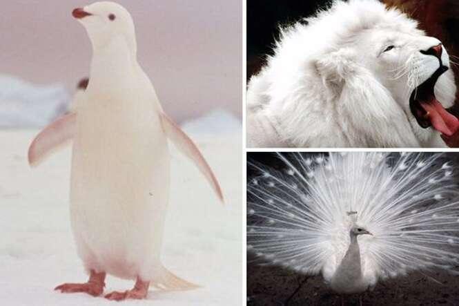 Animais albinos que vão derreter seu coração