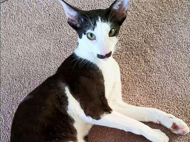 Gatos com marcas curiosas