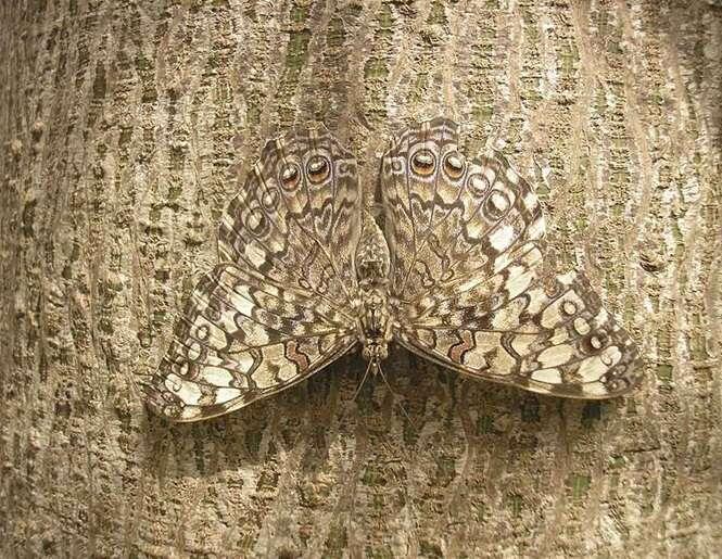 Animais que são mestres na camuflagem