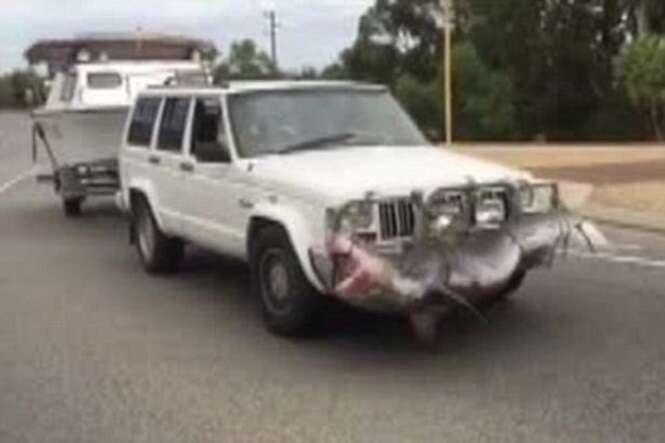 Pescador causa revolta na internet após ser flagrado usando um tubarão-tigre como para-choque de seu carro