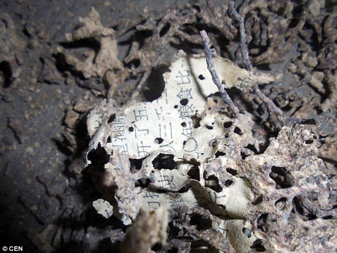 Idosa perde R$ 24 mil após formigas comerem suas economias de toda a vida