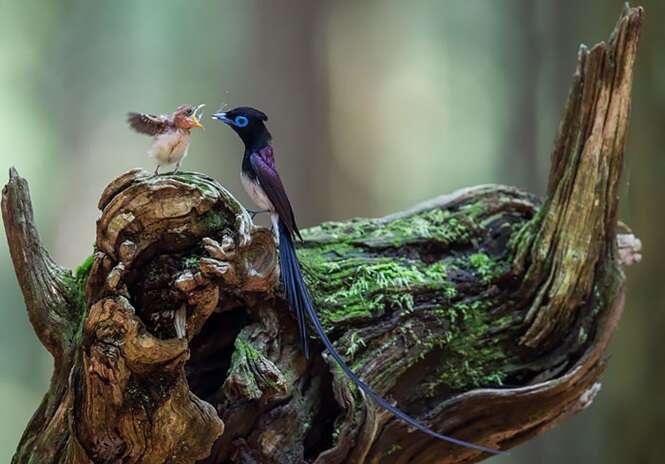 Lindas fotos de pássaros com seus filhotes