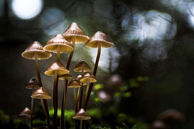 Fotógrafo surpreende com lindas imagens de cogumelos