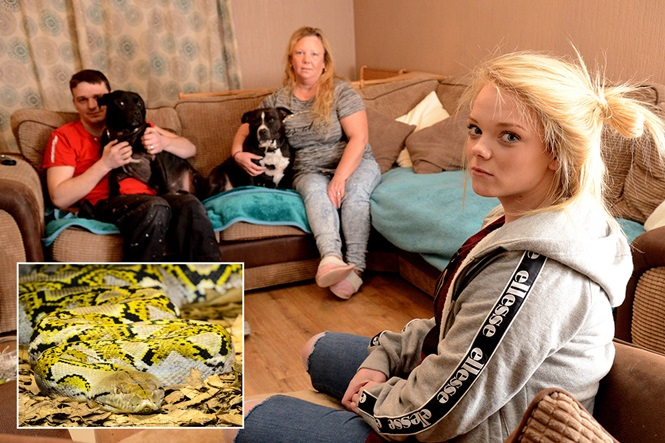 Família vive há seis meses como refém de cobra gigante em sua própria casa