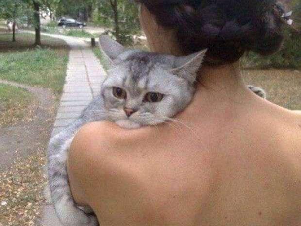 Gato triste faz sucesso após ser fotografado no ombro de sua proprietária
