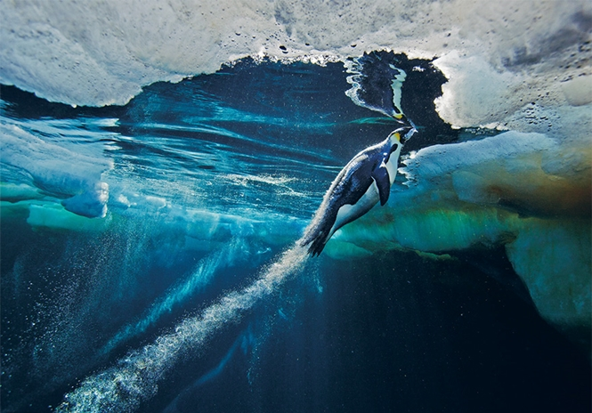 Foto: Paul Nicklen