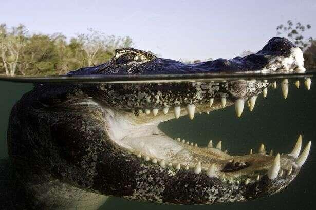Idosa tem braço arrancado por crocodilo quando passeava com seu cão